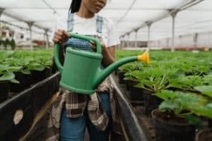 a girl watering the plants
